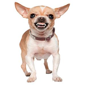 Agressie naar honden