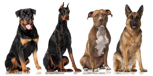 HR honden