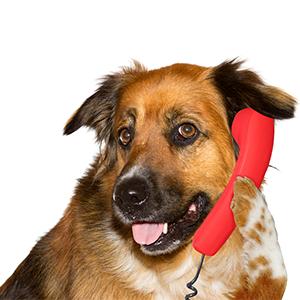 Hondentaal waarbij de hond aan de telefoon zit